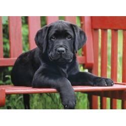 Clementoni 500ч. Пъзел Черно куче